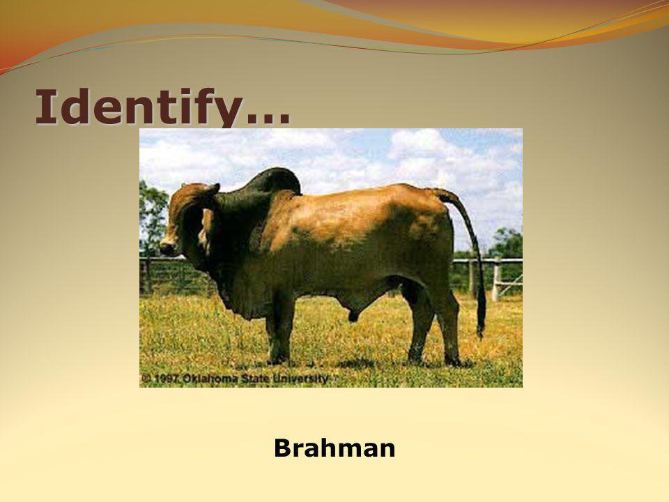 Identify… Brahman
