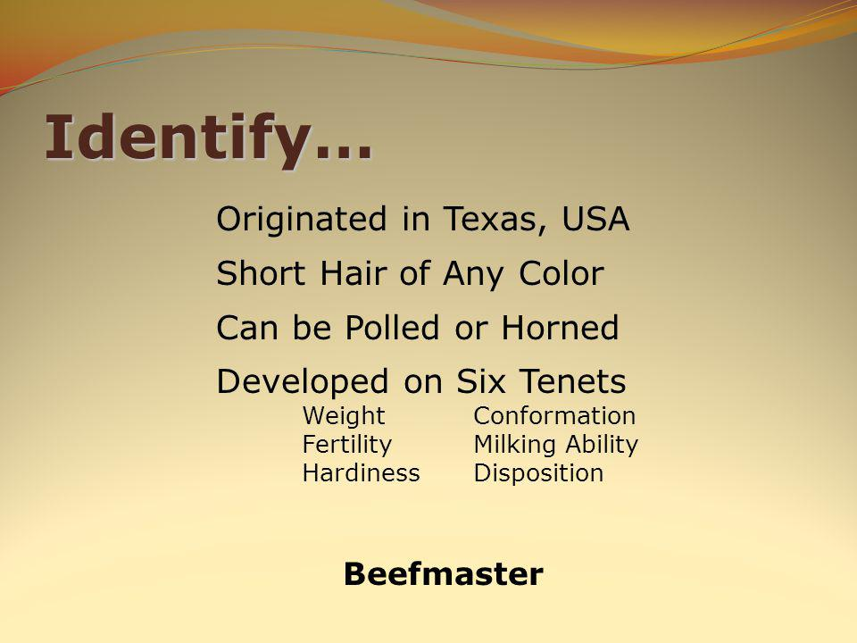Identify… Beefmaster Originated in Texas, USA Short Hair of Any Color Can be Polled or Horned Developed on Six Tenets WeightConformation FertilityMilking Ability HardinessDisposition