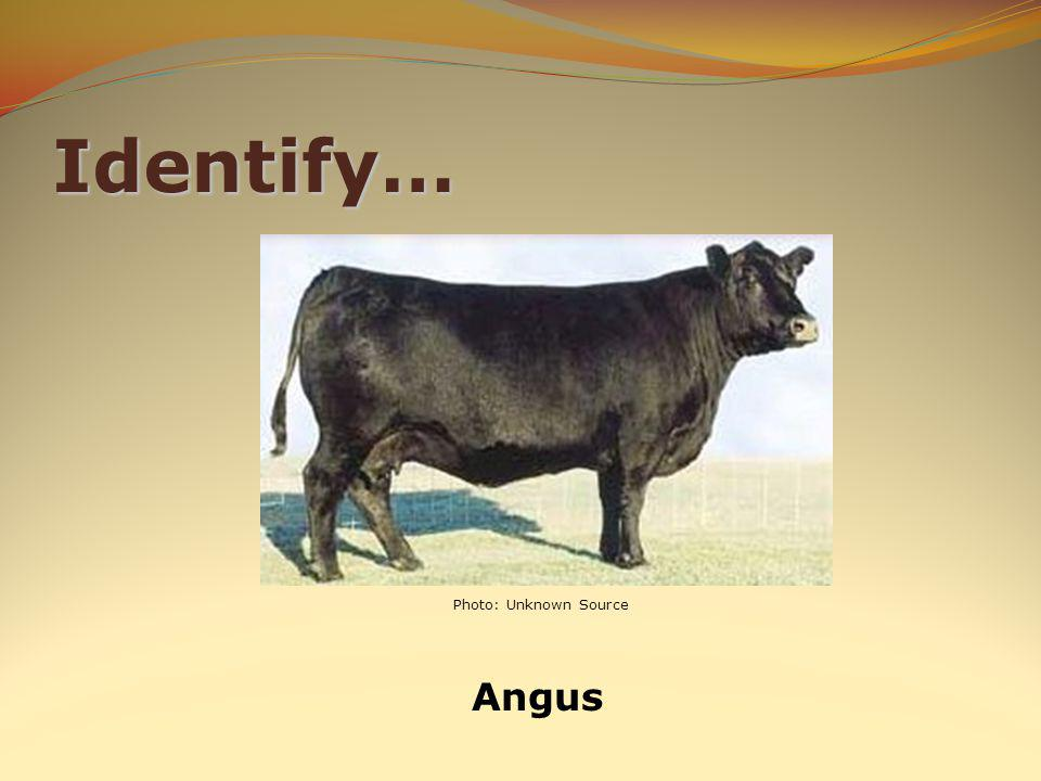 Identify… Angus Photo: Unknown Source