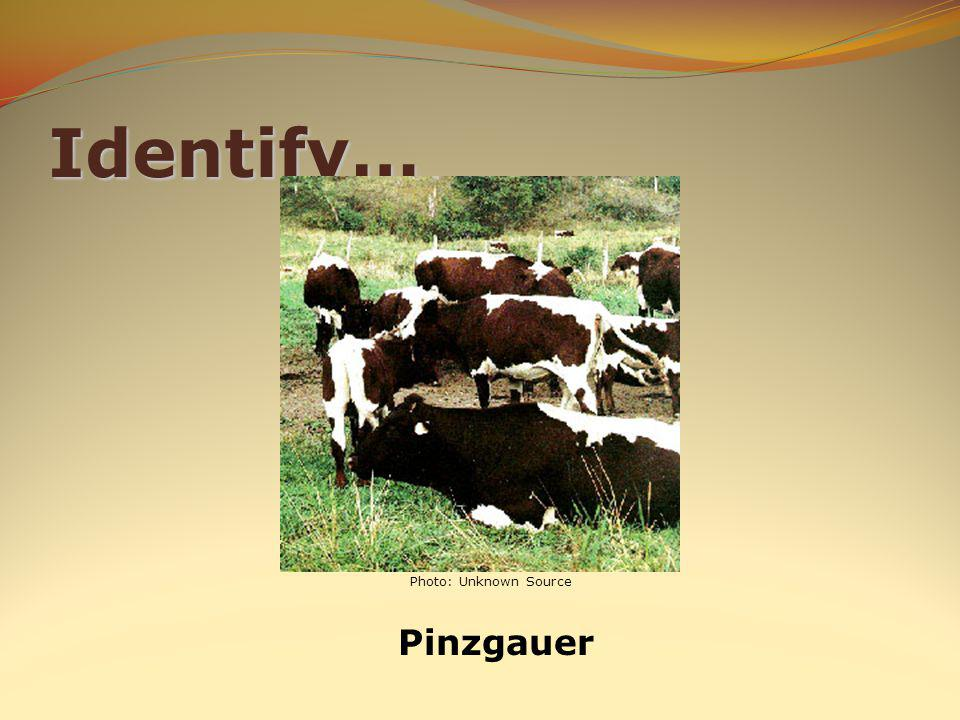 Identify… Pinzgauer Photo: Unknown Source