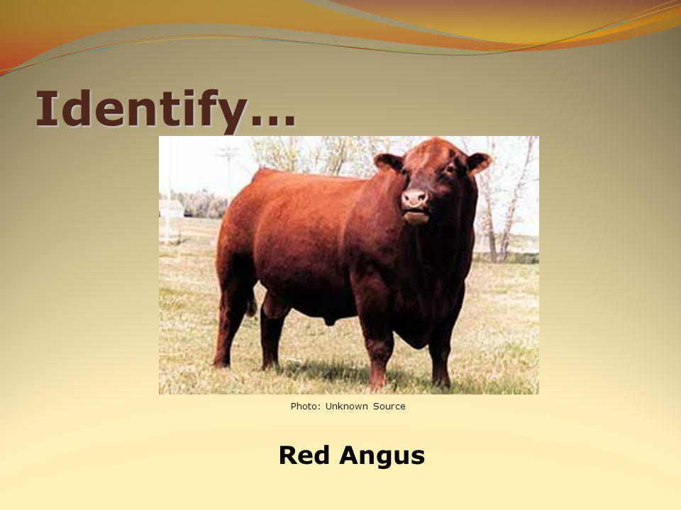 Identify… Red Angus Photo: Unknown Source