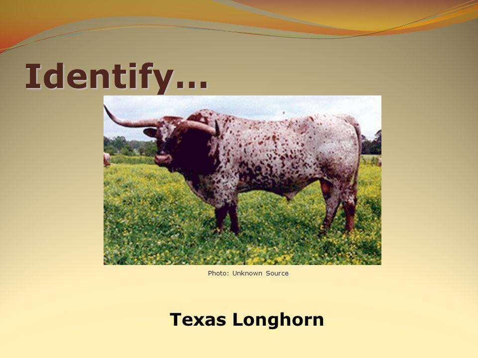 Identify… Texas Longhorn Photo: Unknown Source