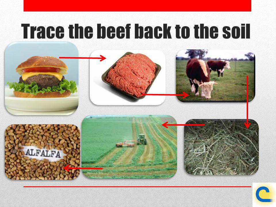 Trace the beef back to the soil