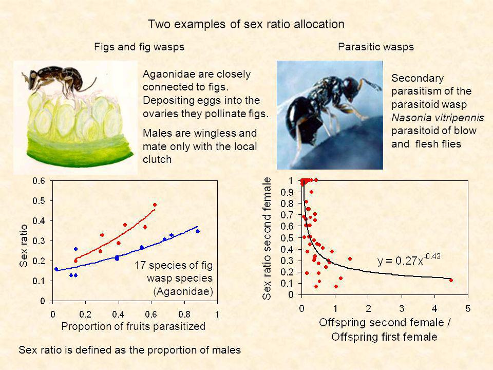 Sex ratio is defined as the proportion of males Two examples of sex ratio allocation Secondary parasitism of the parasitoid wasp Nasonia vitripennis parasitoid of blow and flesh flies Figs and fig wasps Agaonidae are closely connected to figs.
