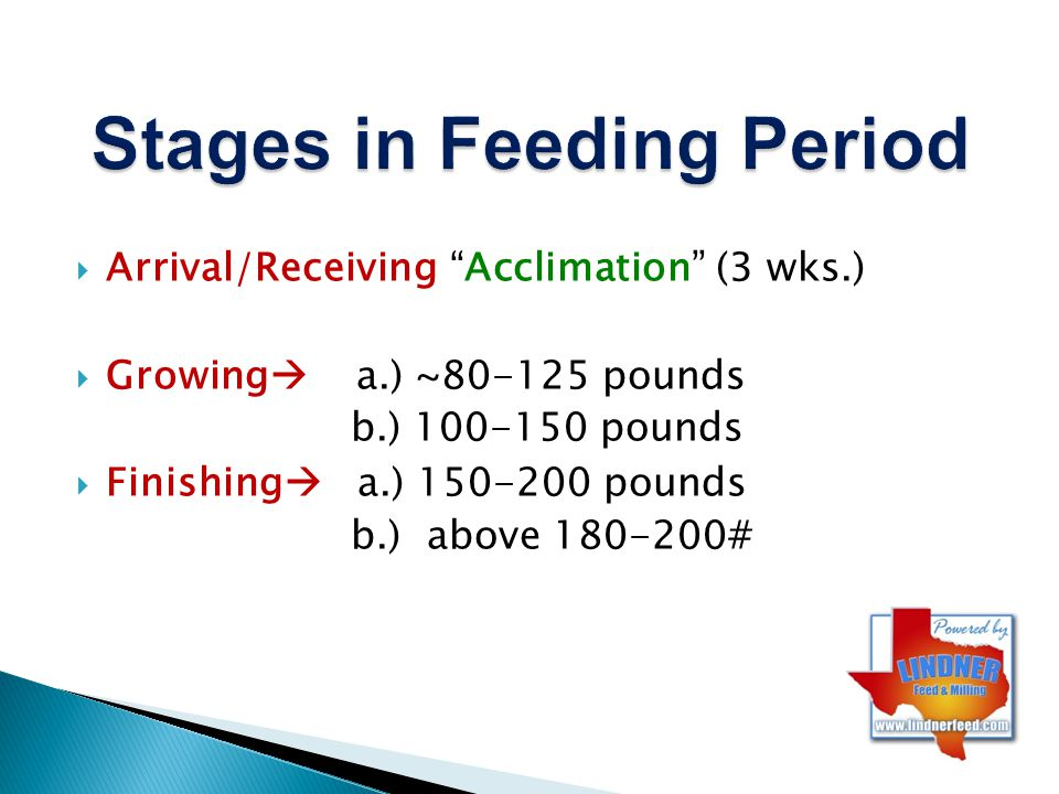 Receive/Acclimation (3 wks.) –Getting on feed (~3# feed =1-1.5 ADG) Feeding same time every day (establish schedule) Comfortable environment Appropriate feed and transitioning –Get Healthy (including gut health…) –Penning Together at first BUT BEST individuals per pen Get tame Surface