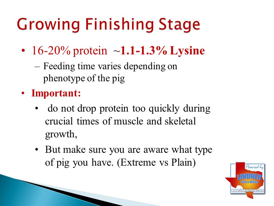 20%- more muscle, shape, expression (usually comes with higher lysine levels) 18%- obviously intermediate, and typically can be used on a majority of pigs.