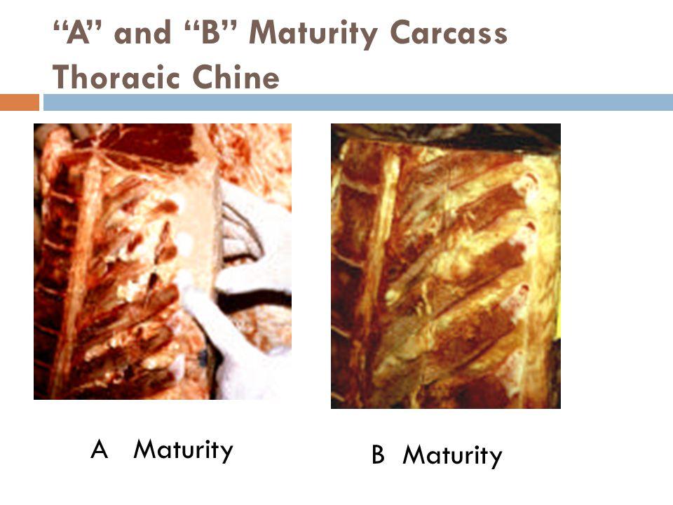 A and B Maturity Carcass Thoracic Chine A Maturity B Maturity