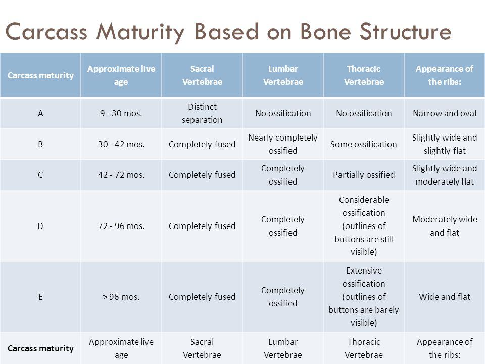 Carcass Maturity Based on Bone Structure Carcass maturity Approximate live age Sacral Vertebrae Lumbar Vertebrae Thoracic Vertebrae Appearance of the
