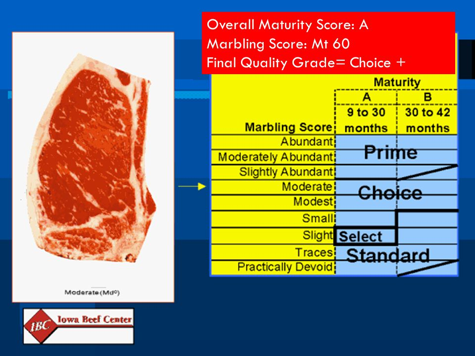 Overall Maturity Score: A Marbling Score: Mt 60 Final Quality Grade= Choice +