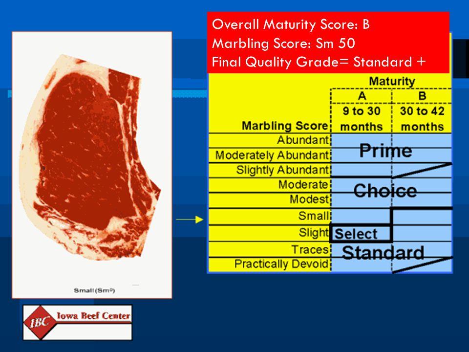 Overall Maturity Score: B Marbling Score: Sm 50 Final Quality Grade= Standard +