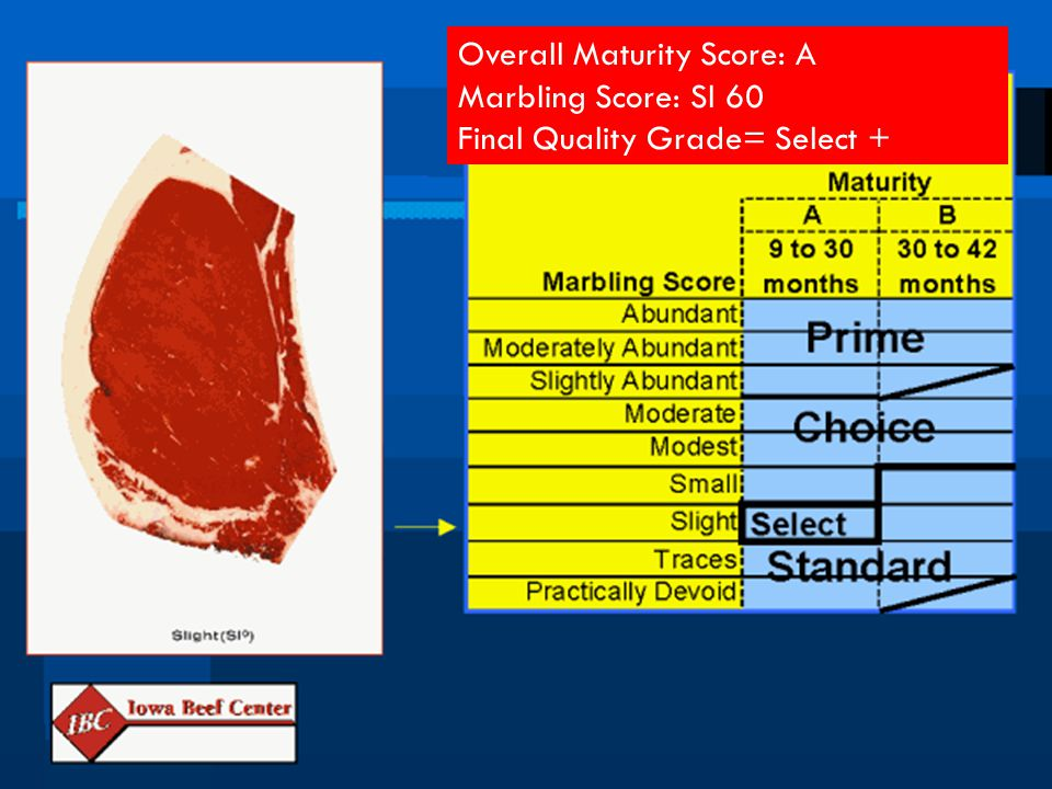 Overall Maturity Score: A Marbling Score: Sl 60 Final Quality Grade= Select +