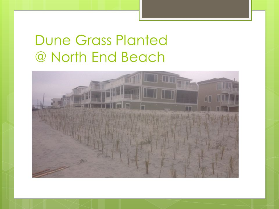 Dune Grass Planted @ North End Beach