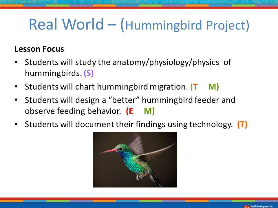 Lesson Focus Students will study the anatomy/physiology/physics of hummingbirds. (S) Students will chart hummingbird migration. (T & M) Students will