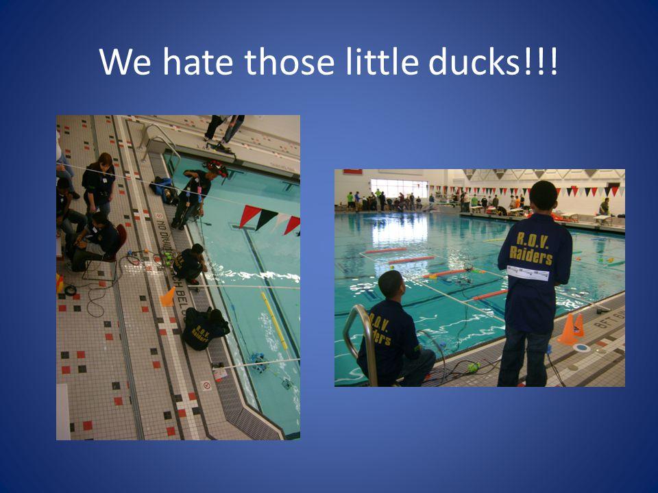 We hate those little ducks!!!
