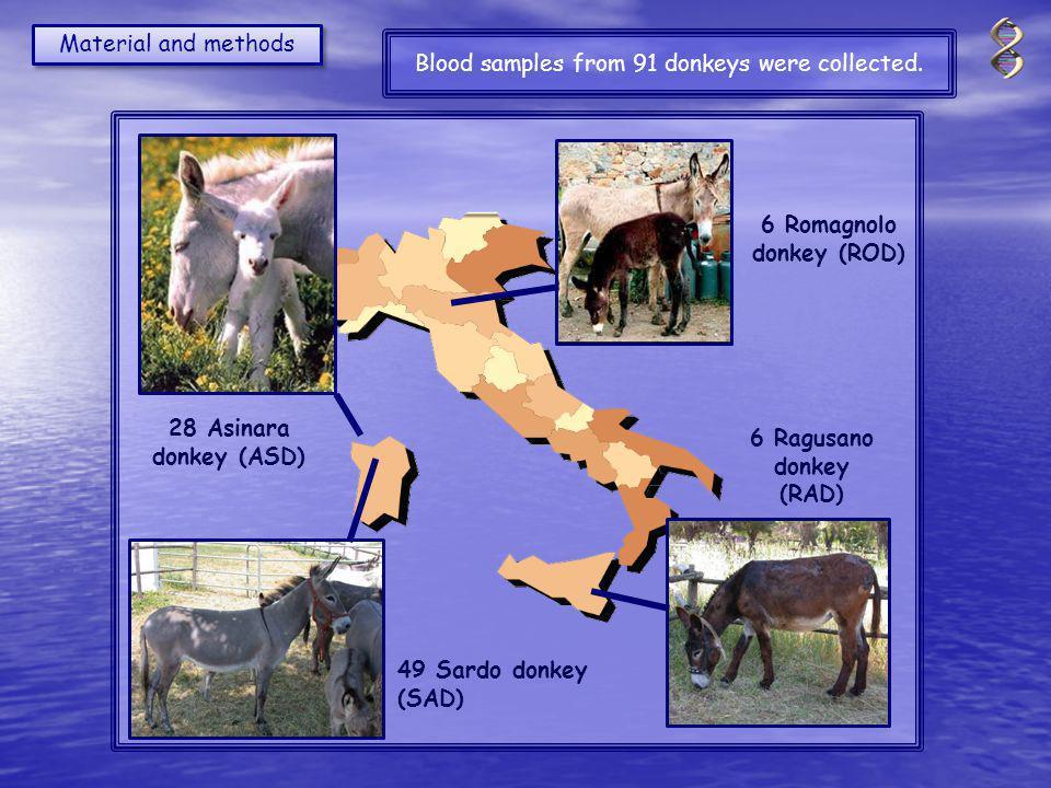 6 Romagnolo donkey (ROD) 6 Ragusano donkey (RAD) 28 Asinara donkey (ASD) 49 Sardo donkey (SAD) Material and methods Blood samples from 91 donkeys were collected.