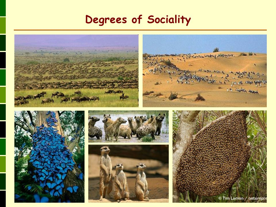 Degrees of Sociality