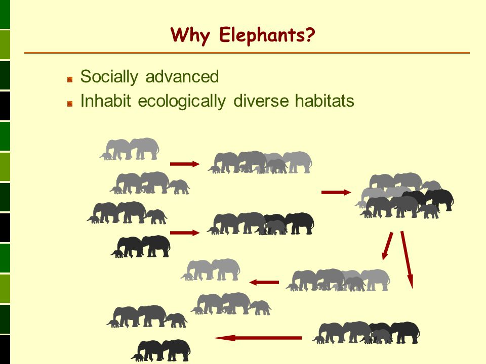 Why Elephants Socially advanced Inhabit ecologically diverse habitats