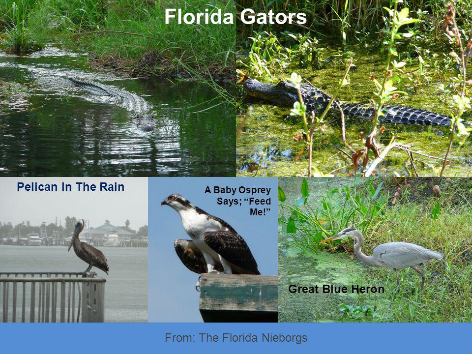 From: The Florida Nieborgs Text We worked on our photography and captured many beautiful scenes