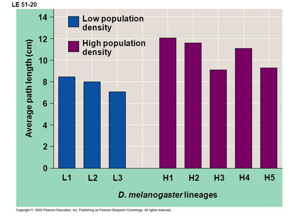 LE 51-20 Low population density L1 D. melanogaster lineages 14 Average path length (cm) 12 10 8 6 4 0 2 High population density L2 L3 H1 H2 H3 H4 H5