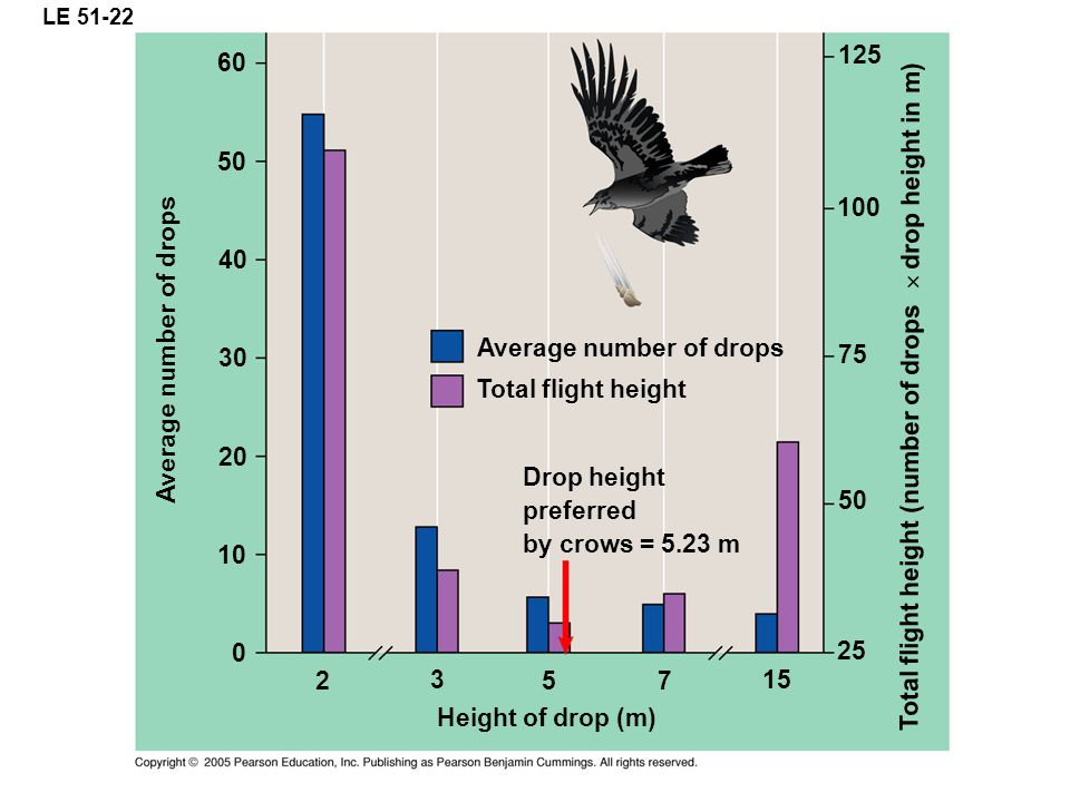 LE 51-22 Average number of drops Total flight height Drop height preferred by crows = 5.23 m Average number of drops 125 100 75 50 25 Height of drop (m) 60 50 40 30 20 10 0 15 5 3 2 7 Total flight height (number of drops drop height in m)