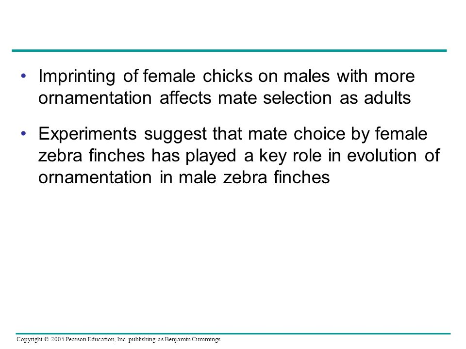 Imprinting of female chicks on males with more ornamentation affects mate selection as adults Experiments suggest that mate choice by female zebra finches has played a key role in evolution of ornamentation in male zebra finches