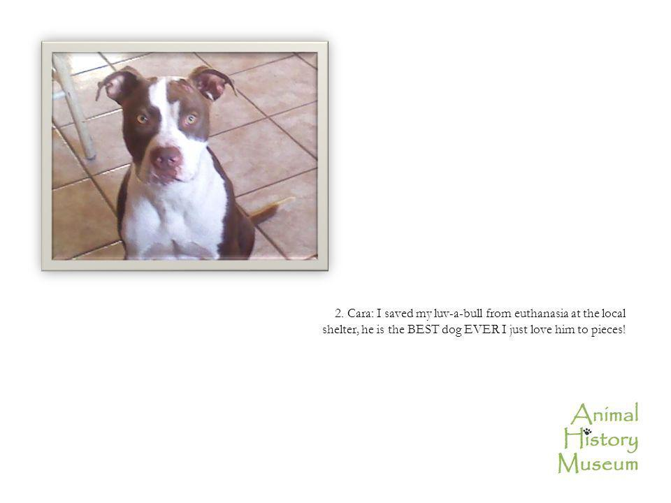 2. Cara: I saved my luv-a-bull from euthanasia at the local shelter, he is the BEST dog EVER I just love him to pieces!