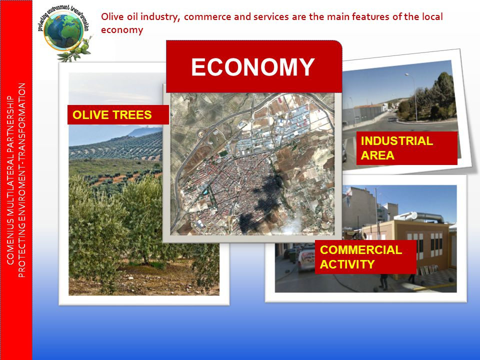 OLIVE TREES INDUSTRIAL AREA COMMERCIAL ACTIVITY Olive oil industry, commerce and services are the main features of the local economy COMENIUS MULTILATERAL PARTNERSHIP PROTECTING ENVIROMENT-TRANSFORMATION ECONOMY