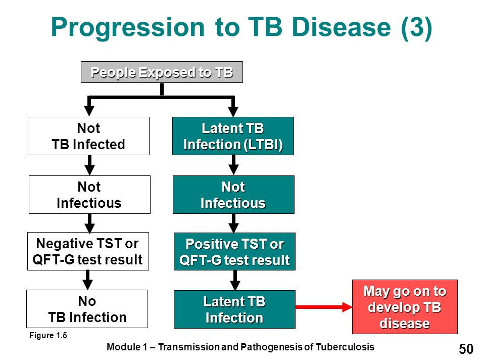Module 1 – Transmission and Pathogenesis of Tuberculosis 50 Progression to TB Disease (3) People Exposed to TB Not TB Infected Latent TB Infection (LTBI) Not Infectious Positive TST or QFT-G test result Latent TB Infection May go on to develop TB disease Not Infectious Negative TST or QFT-G test result No TB Infection Figure 1.5