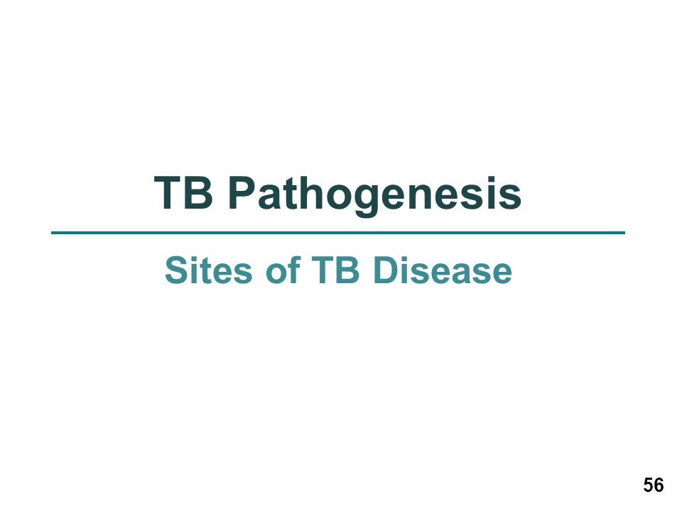56 TB Pathogenesis Sites of TB Disease