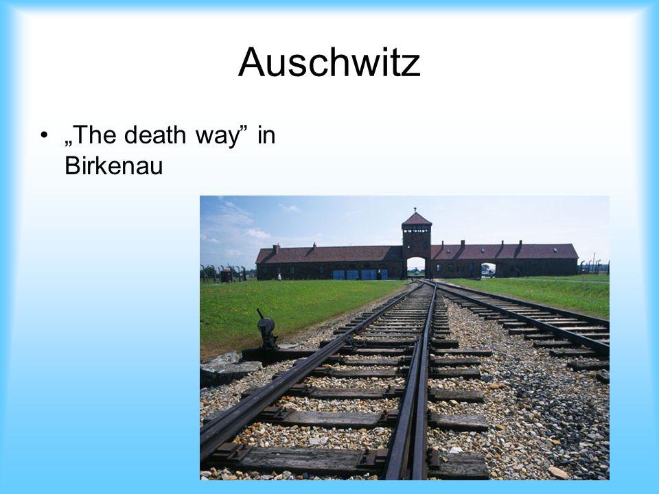 Auschwitz The death way in Birkenau