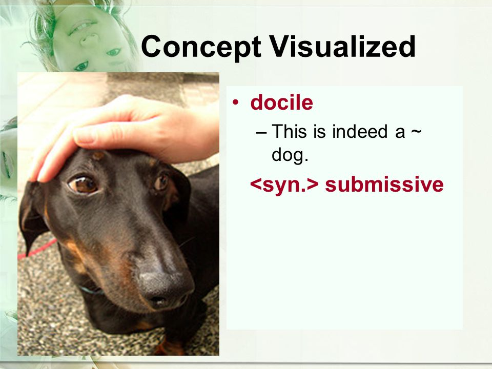 Concept Visualized docile –This is indeed a ~ dog. submissive