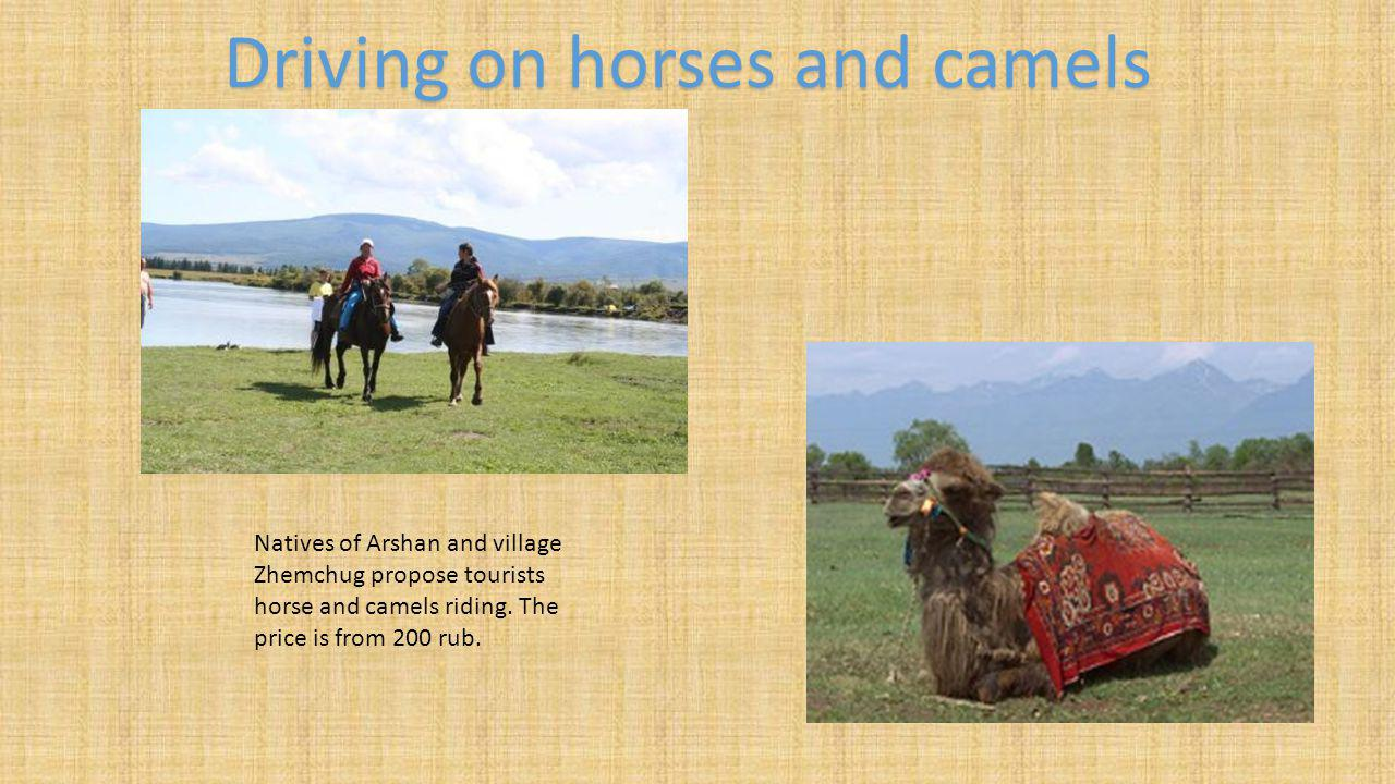 Natives of Arshan and village Zhemchug propose tourists horse and camels riding.