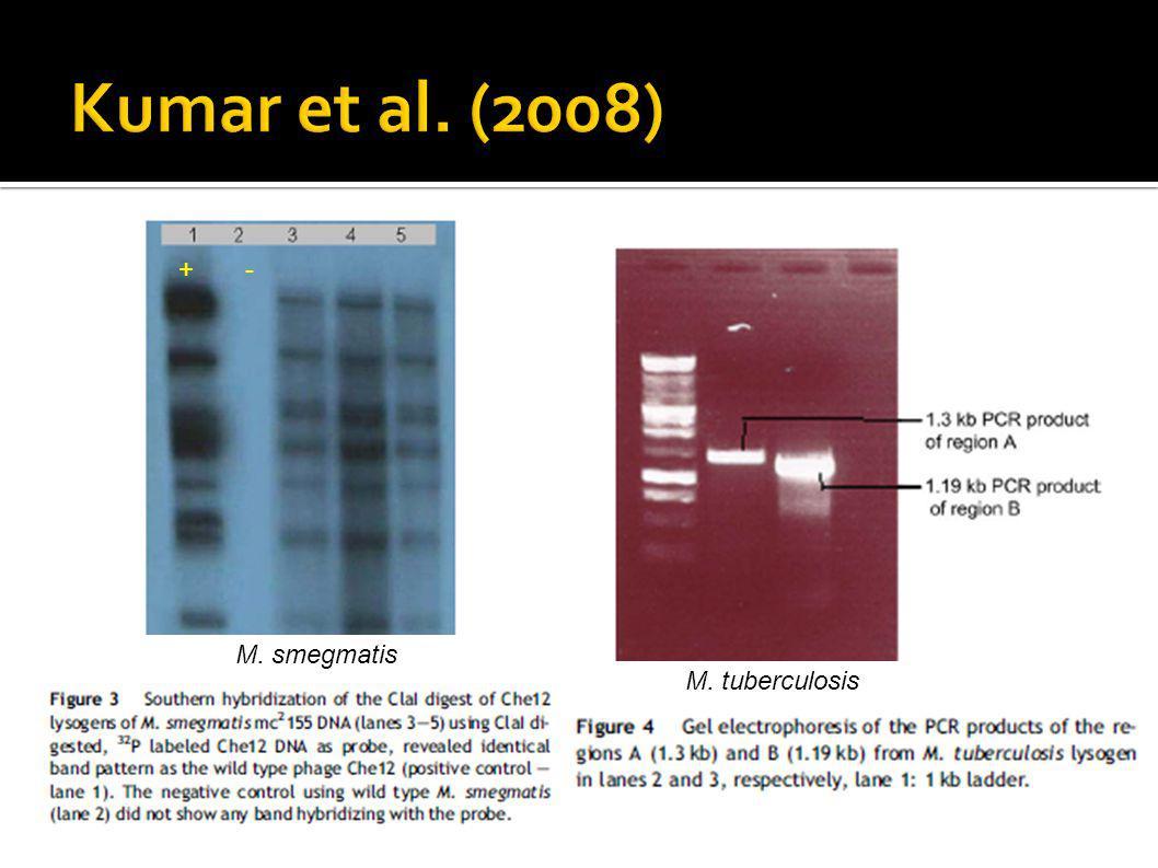 + - M. smegmatis M. tuberculosis