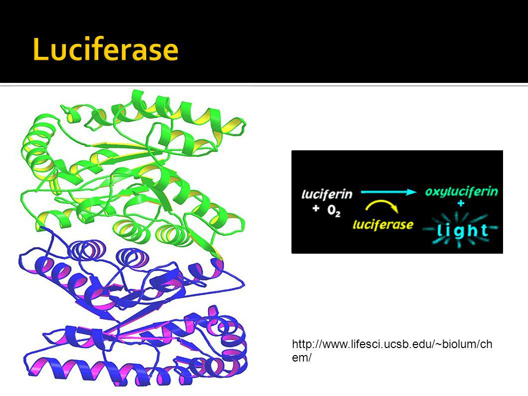 http://www.lifesci.ucsb.edu/~biolum/ch em/