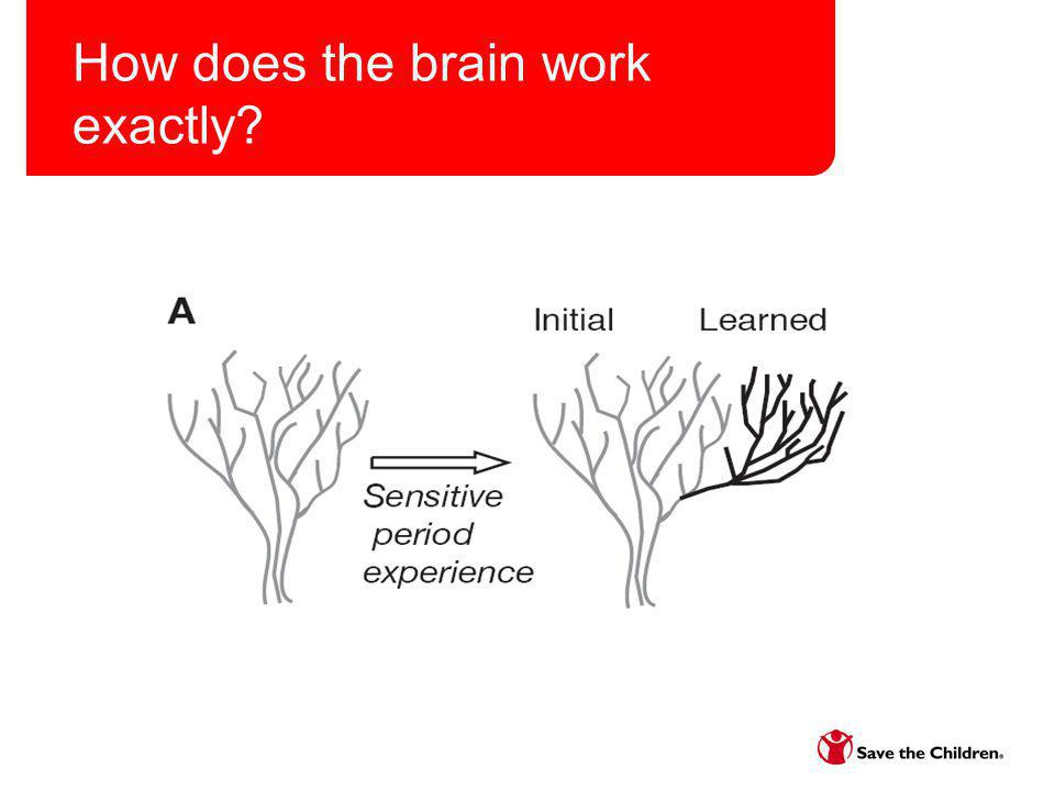Experiences Build Brain Architecture http://developingchild.harvard.edu/resources/mul timedia/videos/three_core_concepts/brain_archit ecture/http://developingchild.harvard.edu/resources/mul timedia/videos/three_core_concepts/brain_archit ecture/