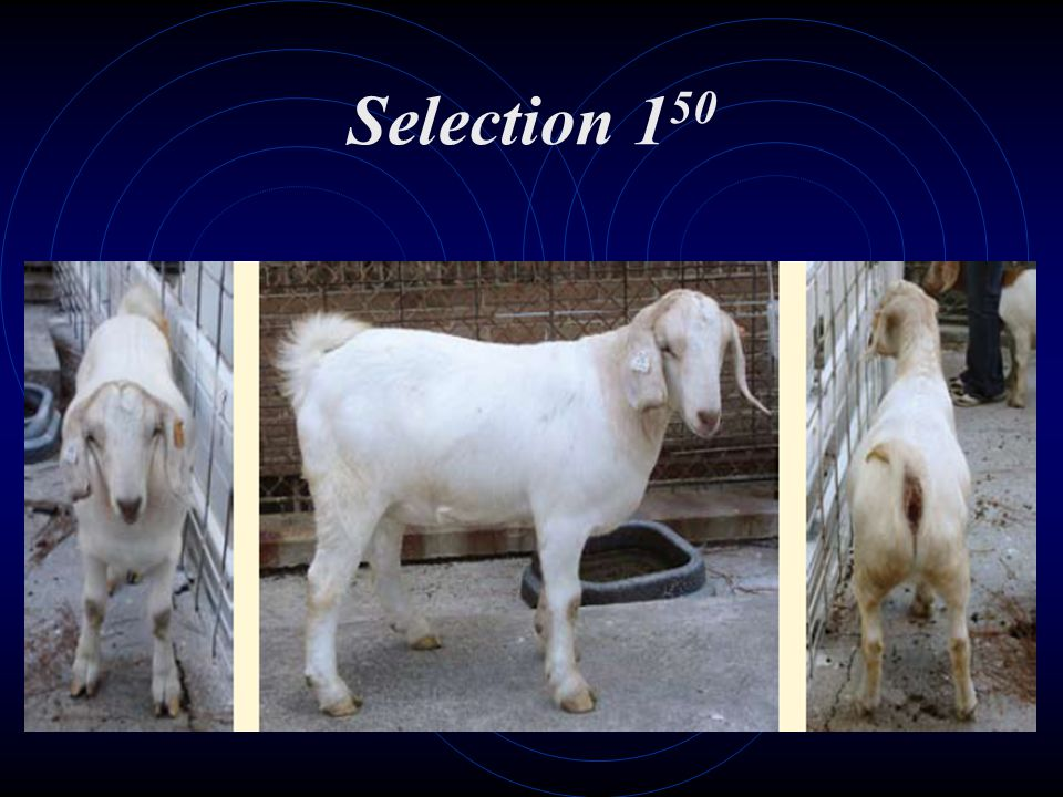 Selection 1 50
