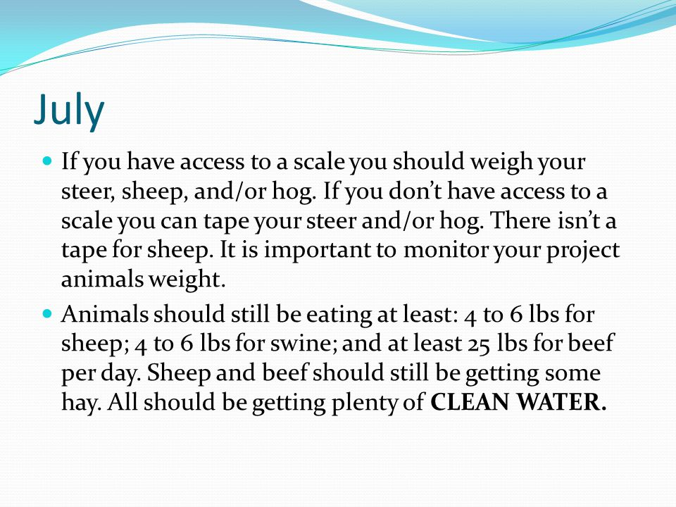 July If you have access to a scale you should weigh your steer, sheep, and/or hog.