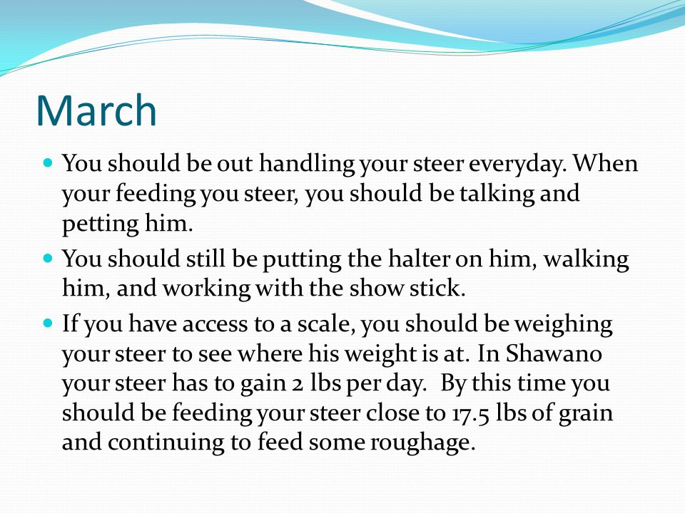March You should be out handling your steer everyday.