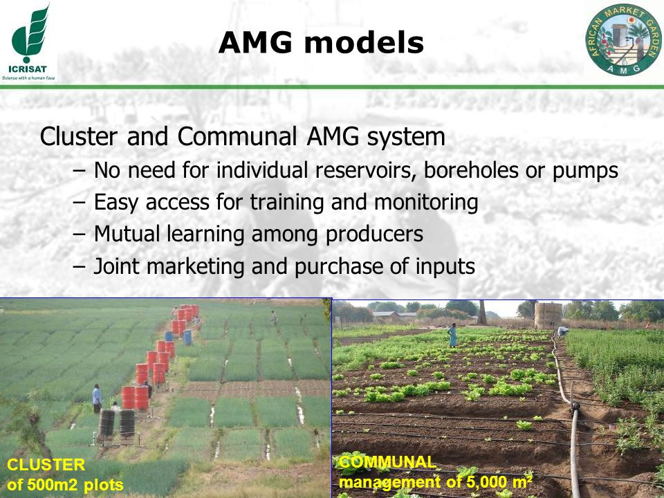 14 AMG models Cluster and Communal AMG system –No need for individual reservoirs, boreholes or pumps –Easy access for training and monitoring –Mutual learning among producers –Joint marketing and purchase of inputs CLUSTER of 500m2 plots COMMUNAL management of 5,000 m²