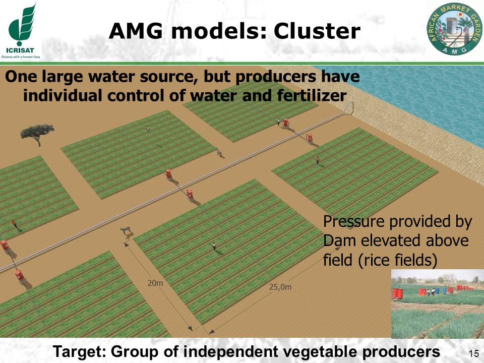 15 AMG models: Cluster One large water source, but producers have individual control of water and fertilizer Target: Group of independent vegetable producers Pressure provided by Dam elevated above field (rice fields)