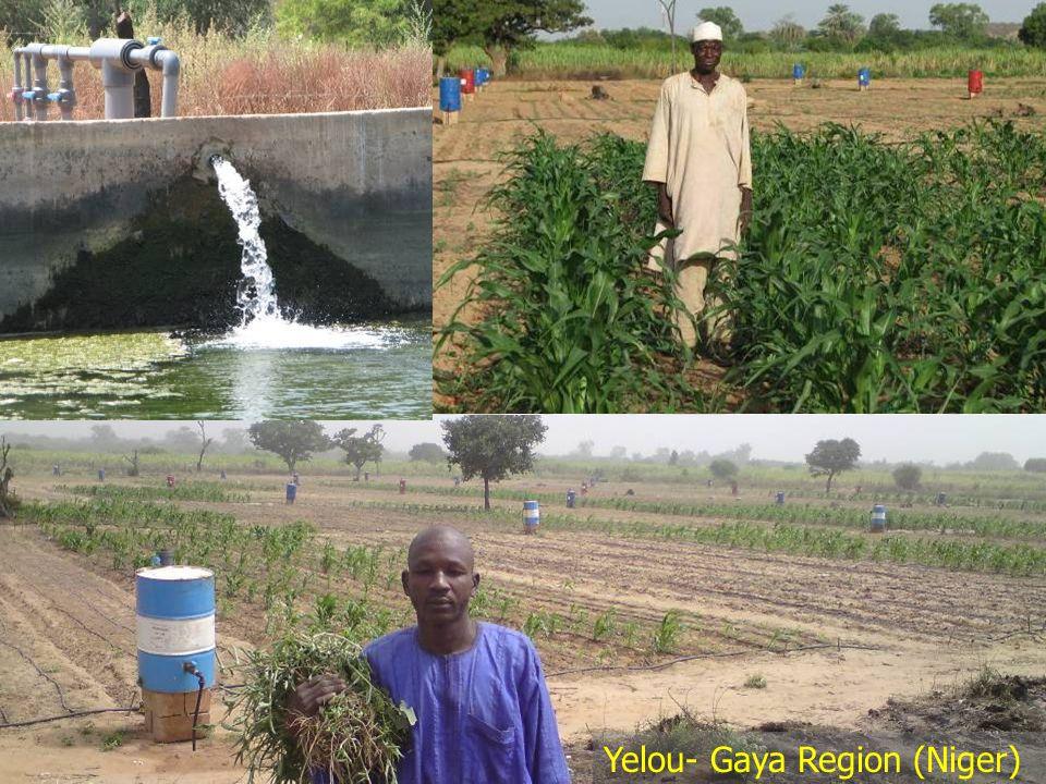 17 Yelou- Nov 2009 Yelou- Gaya Region (Niger)