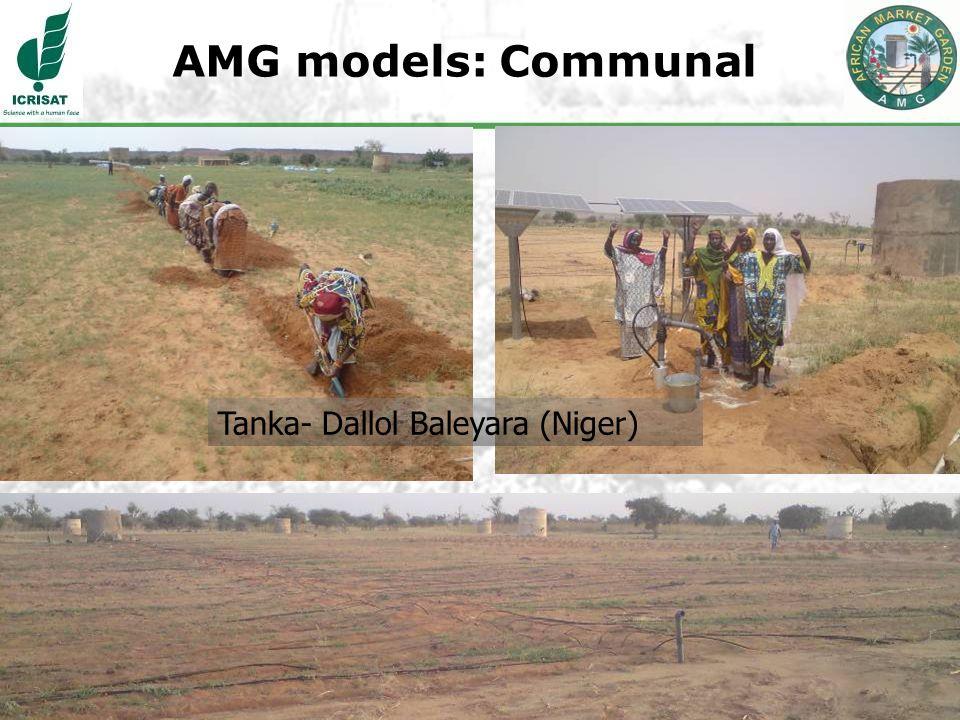 21 AMG models: Communal Tanka- Dallol Baleyara (Niger)