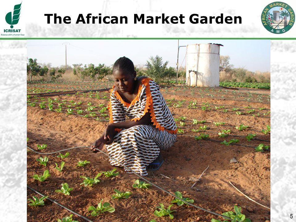 5 The African Market Garden
