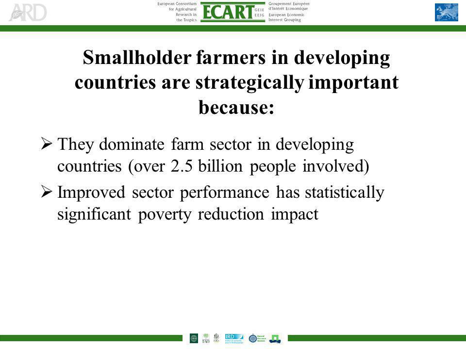 Smallholder farmers in developing countries are strategically important because: They dominate farm sector in developing countries (over 2.5 billion people involved) Improved sector performance has statistically significant poverty reduction impact