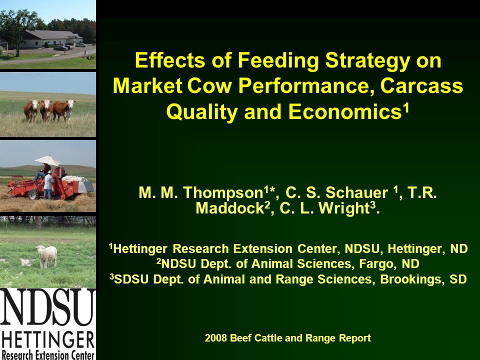 Effects of Feeding Strategy on Market Cow Performance, Carcass Quality and Economics 1 M.