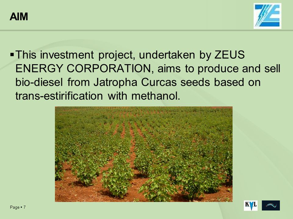 Page 7 AIM This investment project, undertaken by ZEUS ENERGY CORPORATION, aims to produce and sell bio-diesel from Jatropha Curcas seeds based on tra