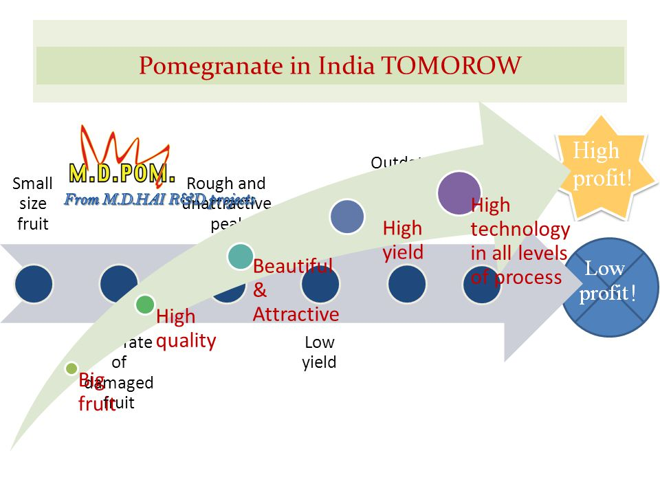 Pomegranate in India today Small size fruit High rate of damaged fruit Rough and unattractiv e peal Low yield Outdated ways for fruit handlings Pomegranate in India TOMOROW Big fruit High quality Beautiful & Attractive High yield High technology in all levels of process
