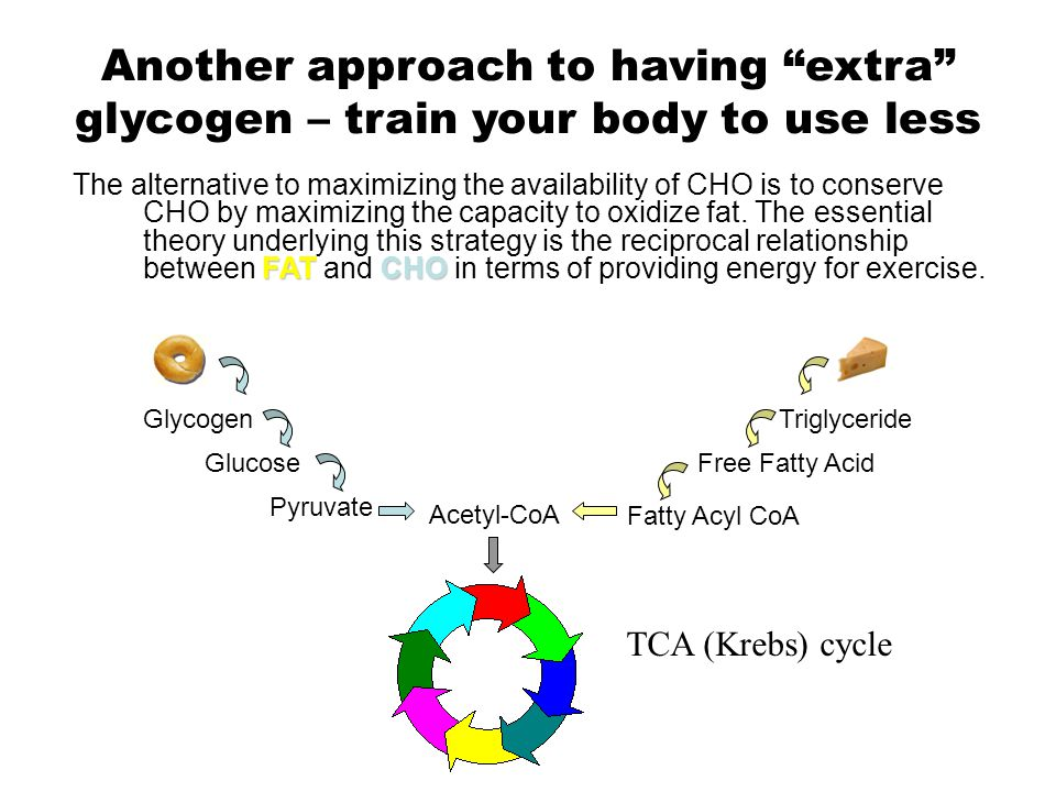 There are several potential sites where the entry of fatty acids into oxidative pathways can be affected: 1.
