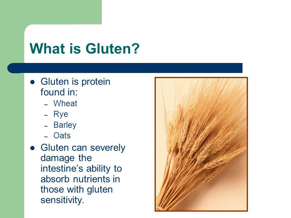 What is Gluten.