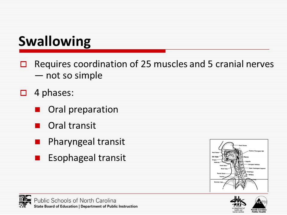 Swallowing Requires coordination of 25 muscles and 5 cranial nerves not so simple 4 phases: Oral preparation Oral transit Pharyngeal transit Esophageal transit
